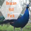 自然を満喫&動物とふれ合える「Beacon Hill Park」